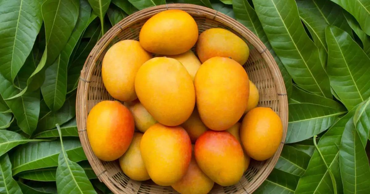 Mangoes and blood sugar
